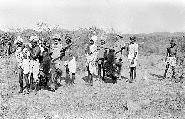 Old photographic plate showing Asian bears carried back to camp