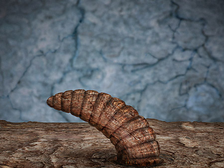 Worm made from tree bark and photoshop