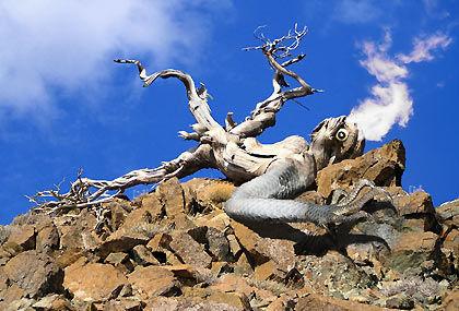 Rock lizard tree