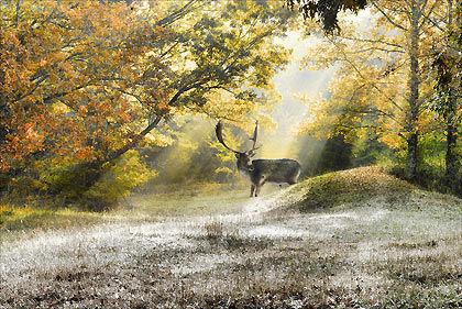 Deer in sun rays