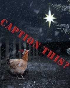 Christmas Chicken Caption this