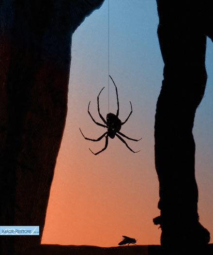 Spider monatage
