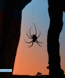 Spider montage and creating silhouettes