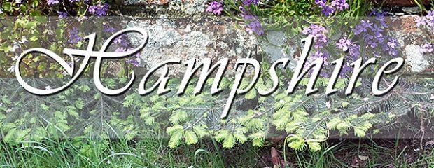 Photo restoration company in Hamsphire