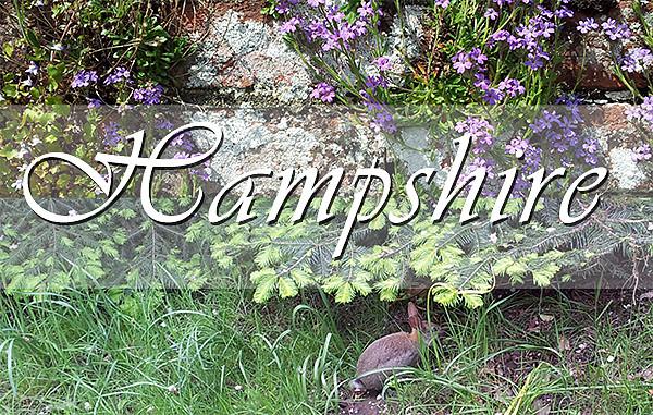 Photo Restoration Hampshire UK