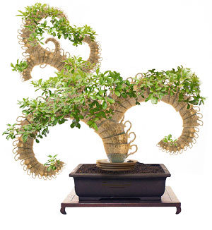 Photo montage of porcelain cups and plant to make a bonsai tree