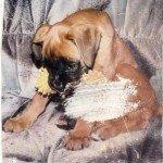 Restoring pet photos