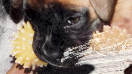Restoring pet photos the dogs face