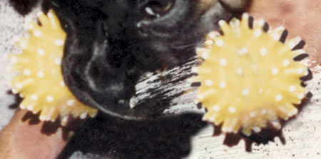 Restoring pet photos the dogs toy