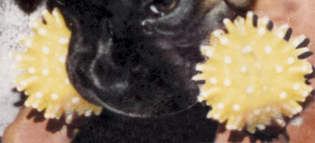 Restoring pet photos the dogs face restored